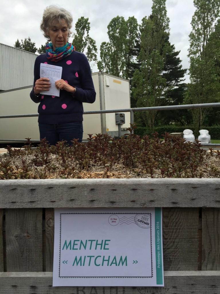 Menthe Mitcham
